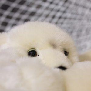 teddy-3
